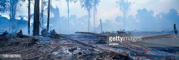 Tropical Rainforest being burnt for cattle grazing Imataca Forest Reserve Venezuela South America.