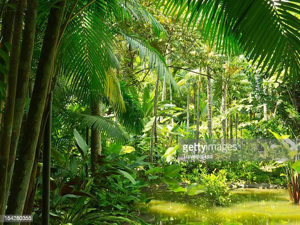 tropical rainforest, botanical gardens, singapore - singapore botanic gardens stock photos and pictures