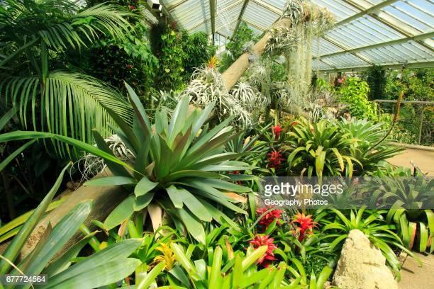 Tropical rainforest environment inside the Princess of Wales conservatory, Royal Botanic Gardens, Kew, London, England, UK.
