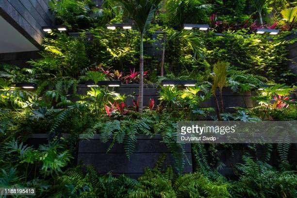 tropical rainforest foliage plants indoor. - zweifarbig farbe stock-fotos und bilder