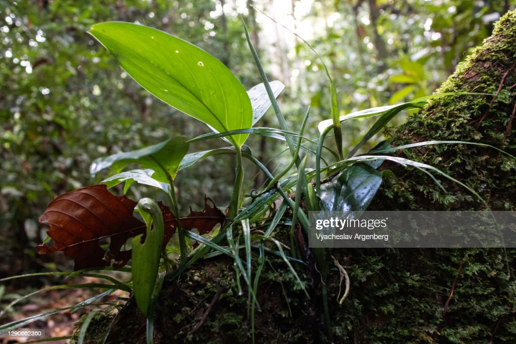 Tropical rainforest, forest floor after heavy rain, Borneo, Malaysia : Stock Photo