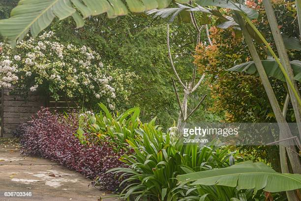 tropical rainforest garden - tropical bush stock photos and pictures