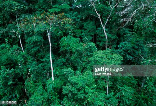 tropical rainforest in gabon - gabon stock pictures, royalty-free photos & images