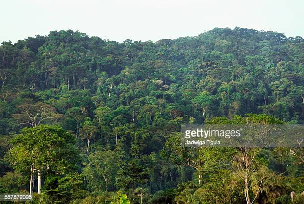 tropical rainforest in liberia, west africa - liberia stock pictures, royalty-free photos & images