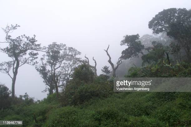 tropical rainforest in sri lanka wilderness - argenberg stock-fotos und bilder