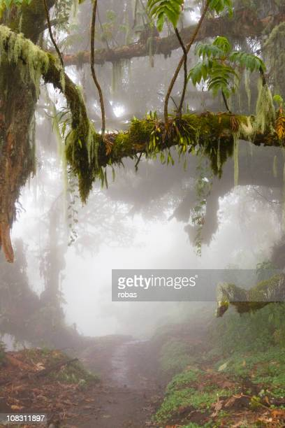 tropical rainforest in tanzania - mount meru stock photos and pictures