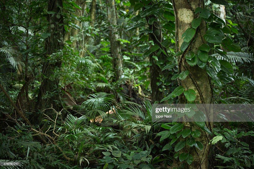 Jungla Tropical Stunning Chiang Mai Jungle Trekking With Jungla
