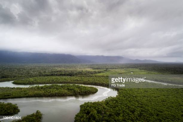 bosque húmedo tropical - río amazonas fotografías e imágenes de stock
