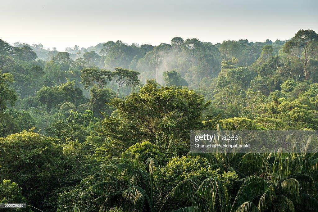 Tropical Rainforest : Stock Photo