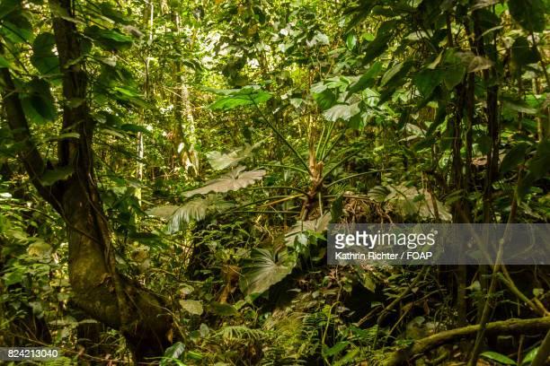 tropical rainforest - sint eustatius stockfoto's en -beelden