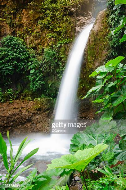 tropical rainforest waterfall - ogphoto stock photos and pictures