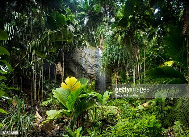 tropical rainforest with waterfall - idyllic stock pictures, royalty-free photos & images
