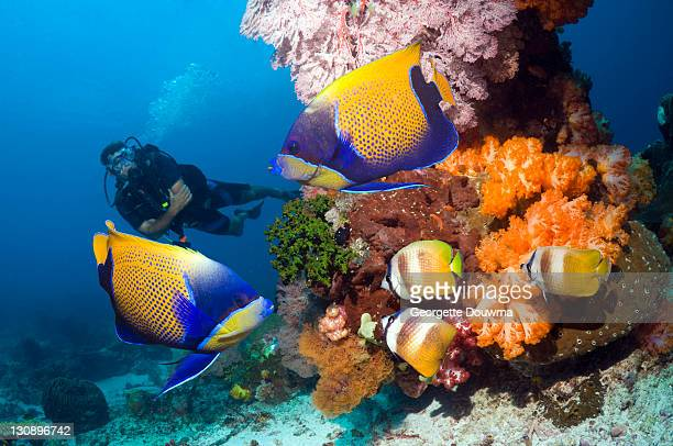 tropical reef fish with diver - east nusa tenggara stock pictures, royalty-free photos & images