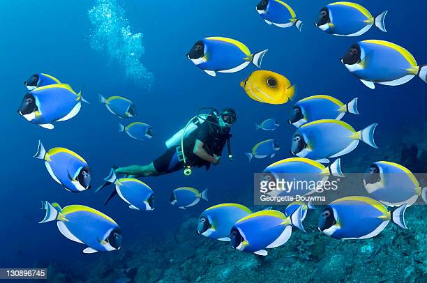 tropical reef fish with diver - スキューバダイビング ストックフォトと画像