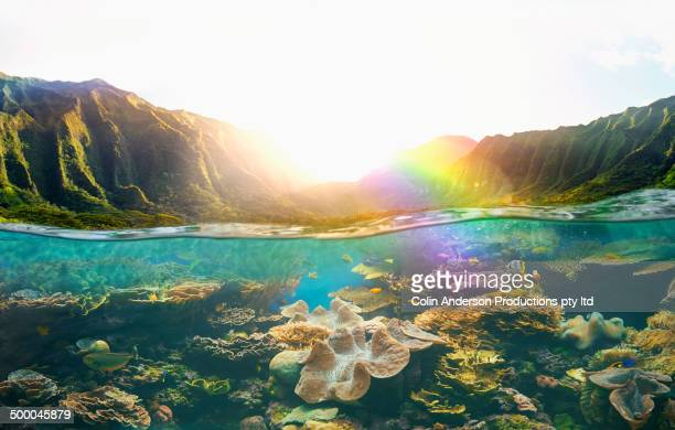 tropical reef under rural cliffs - reef stock pictures, royalty-free photos & images