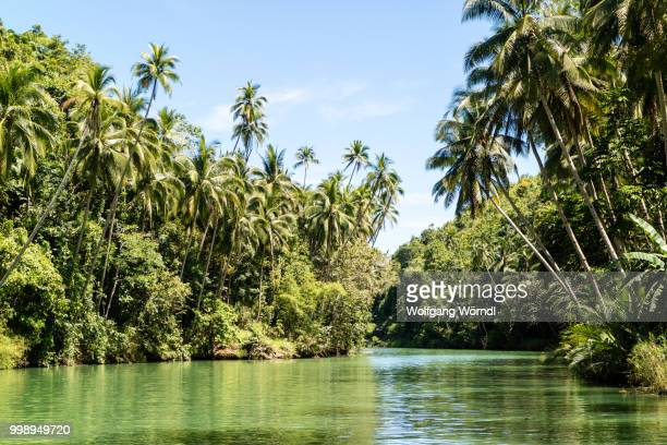 tropical river - wolfgang wörndl stock pictures, royalty-free photos & images