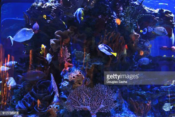 tropical saltwater aquarium - aquarium stock pictures, royalty-free photos & images