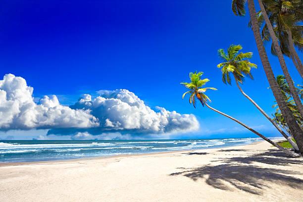 Tropical sandy beach with coconut trees and deep blue sky