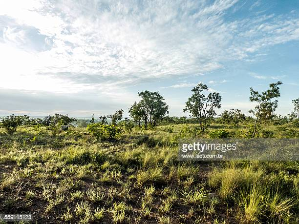 tropical savanna ecoregion. - cerrado stock pictures, royalty-free photos & images