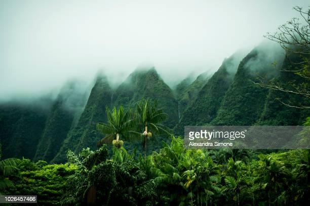 tropical scenery, kaneohe, oahu, hawaii islands, usa - regenwald stock-fotos und bilder