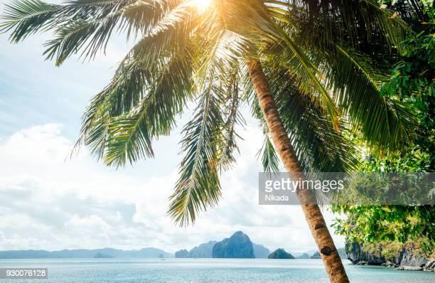 Tropische Landschaft mit schönen Palmenstrand