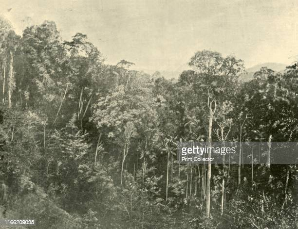 Tropical Scrubs Blackall Range Queensland' 1901 Mountain range in South East Queensland Australia The first European explorer in the area was Ludwig...
