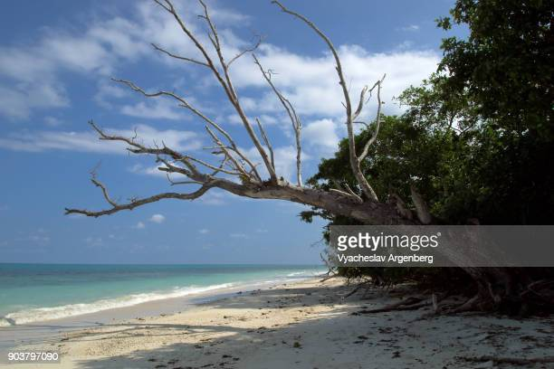 tropical sea beach, east side of havelock island, andamans, india - argenberg ストックフォトと画像