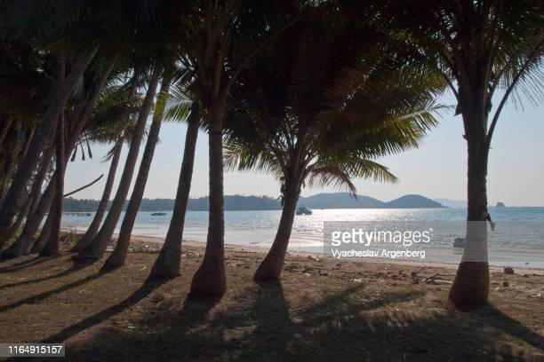 tropical sea lagoon with reclining palm trees, sunny afternoon, koh mak, gulf of thailand - golf von thailand stock-fotos und bilder