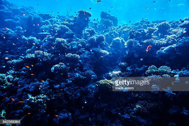 tropical sea life, soft coral