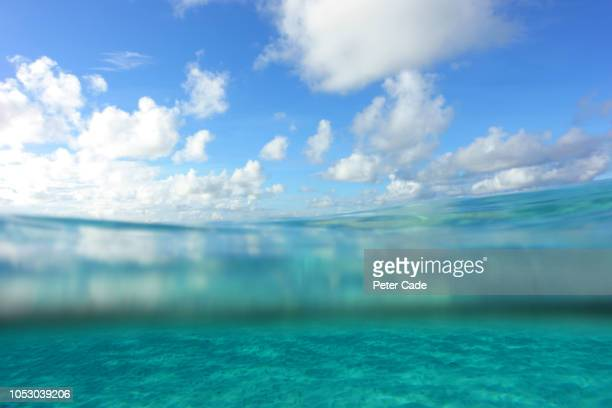 Tropical sea, partial underwater view