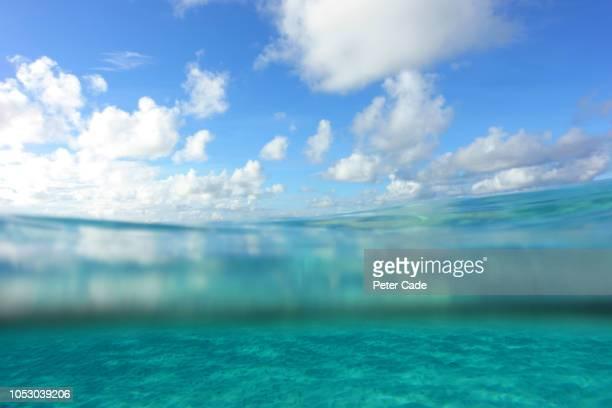 tropical sea, partial underwater view - land in sicht stock-fotos und bilder