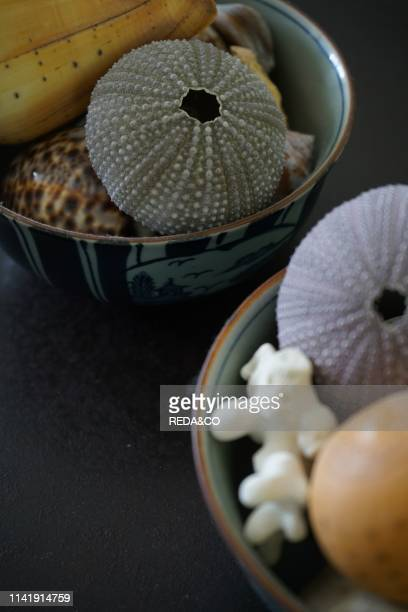 Tropical seashells  sea urchins and white coral in a Japanese bowl