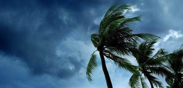 tropical storm 627067972