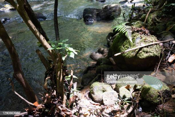 tropical stream in borneo jungle, malaysia - argenberg stock pictures, royalty-free photos & images