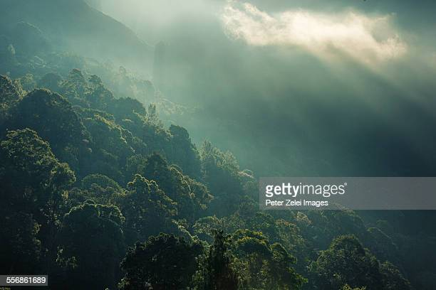 Tropical sunrise in the forest