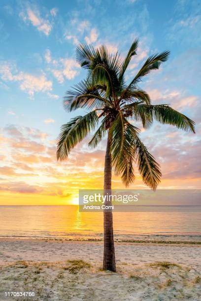 tropical sunset with a palm tree in foreground - tropical tree stockfoto's en -beelden