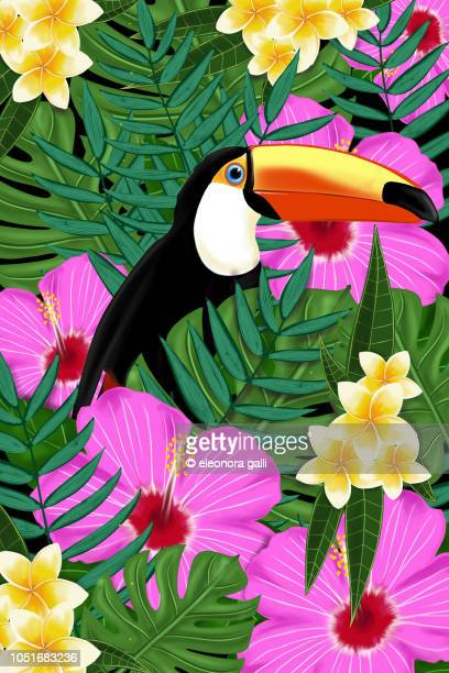 tropical toucan - tucano imagens e fotografias de stock