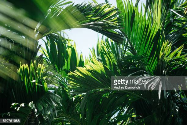 tropical trees background - tropical tree stock pictures, royalty-free photos & images
