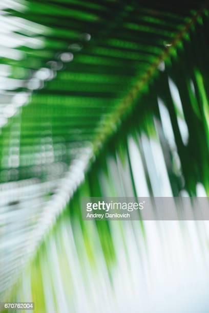 Tropische bomen onscherpe achtergrond