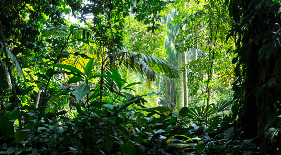Tropical trees in the sunlight - Background - Jungle 944103232
