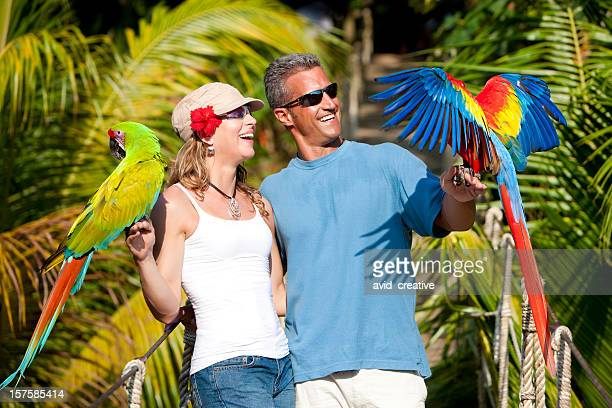 tropical vacation: couple on rope bridge with macaws - macaw stock pictures, royalty-free photos & images