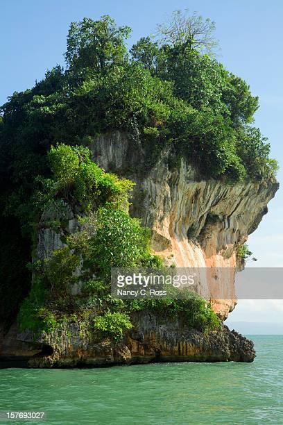 Tropical Vegetation On Rock, Los Haitises NP, Dominican Republic