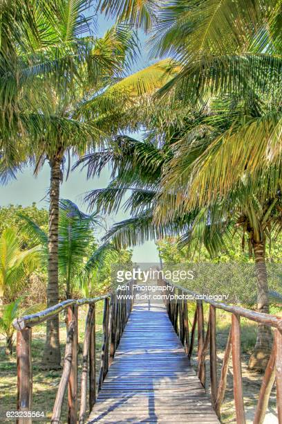 tropical walkway - varadero, cuba - varadero beach stock pictures, royalty-free photos & images
