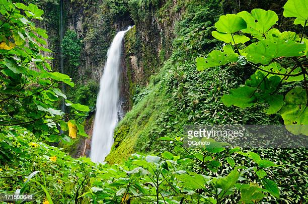 tropical waterfall framed by lush foliage - ogphoto stock photos and pictures