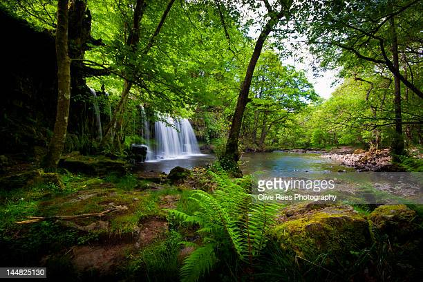 tropical waterfall - tropical rainforest stock pictures, royalty-free photos & images