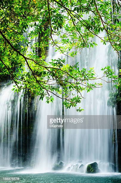tropical waterfall with backlit leaves - ogphoto stock photos and pictures