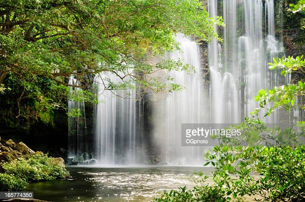 Tropical waterfall with backlit leaves