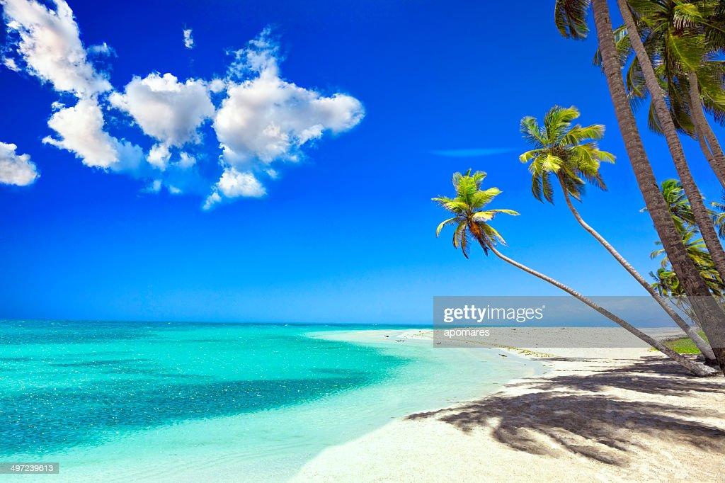 トロピカルな白砂のビーチ。カリブの島、ココナッツの木 : ストックフォト