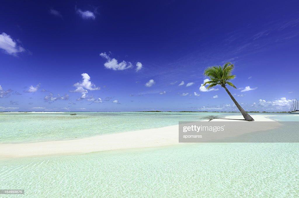 Tropischen weißen sand cay Strand mit einsamem coconut palm tree : Stock-Foto