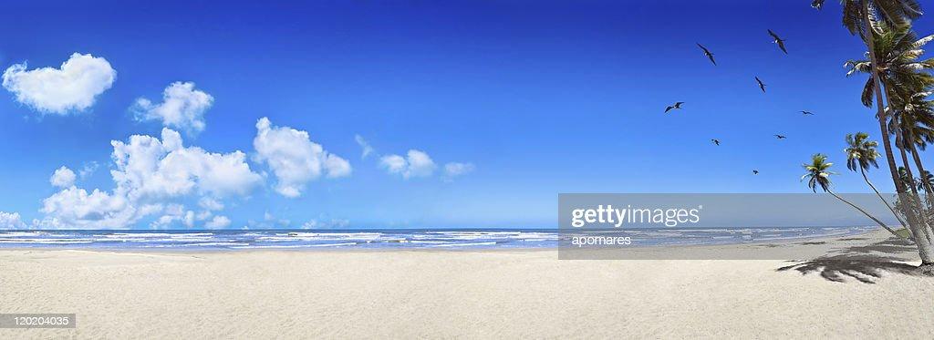Tropicale plage de sable blanc vierge : Photo